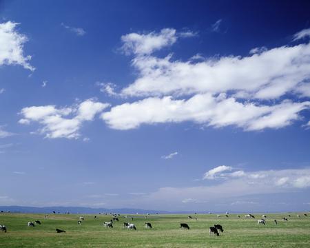 grazing: Grazing