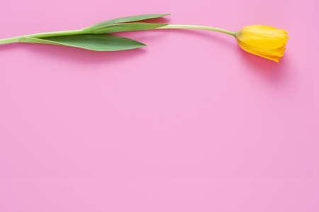 yellow: Yellow tulips