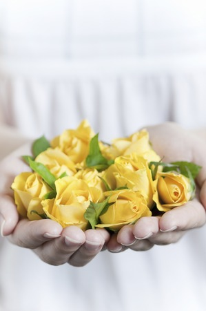 both: Both hands full of yellow roses Stock Photo