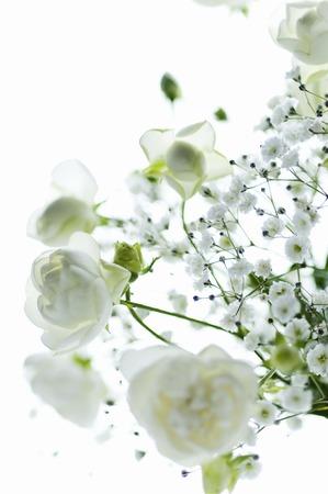 White Rose haze gras vaas vaas Stockfoto