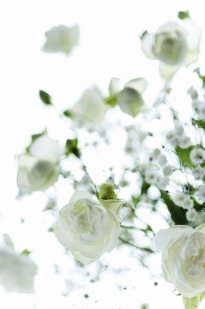 uplifting: White Rose haze grass vase vase Stock Photo