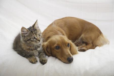 couchDax 새끼 고양이에 좋은 친구