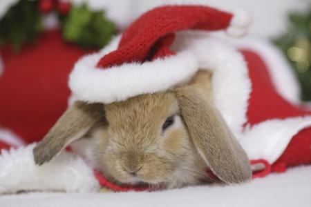 bunny xmas: Rabbits Christmas