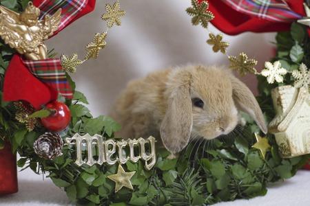 mammalia: Rabbits Christmas