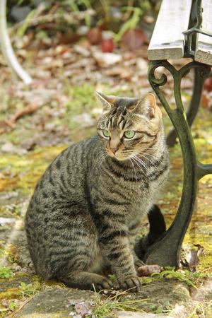 gato jugando: Gato que juega en el jardín Foto de archivo