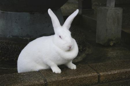 hokuriku: White Rabbit