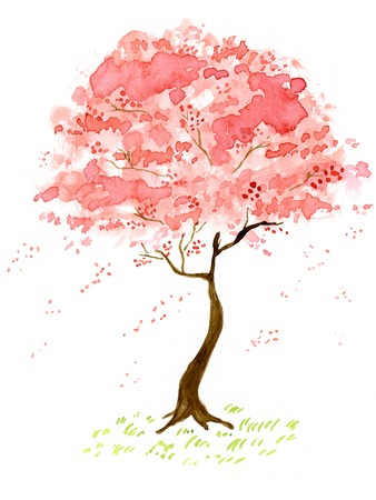 Sakura Standard-Bild - 63186723