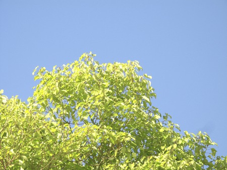 reviving: Blue skies and green