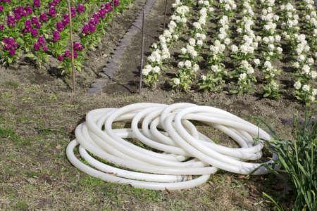 flowerbed: Flowerbed watering hose
