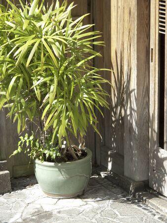 doorstep: Doorstep of ornamental plants of private house Stock Photo