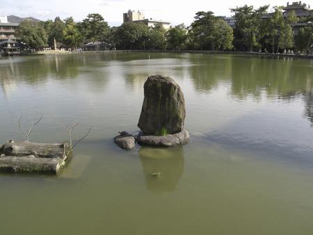 nara: Nara Sarusawa pond