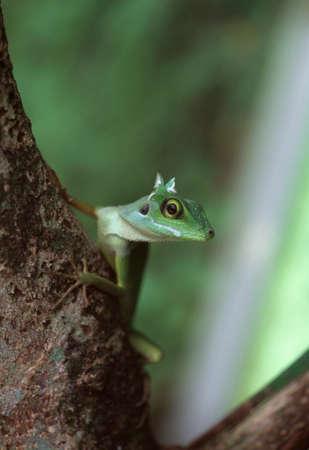 reptiles: Reptiles Stock Photo