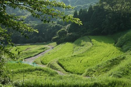 terraced: Terraced fields