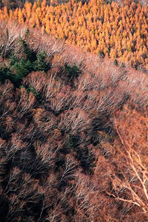 deciduous: Deciduous forests