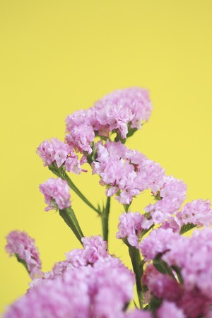 florid: Pink flower