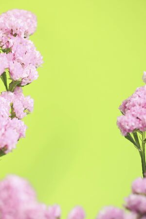 disperse: Pink flower frame Stock Photo