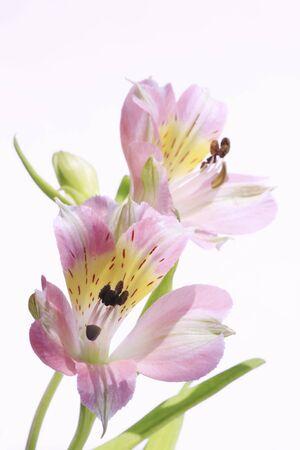 florid: Flower urizeuzen