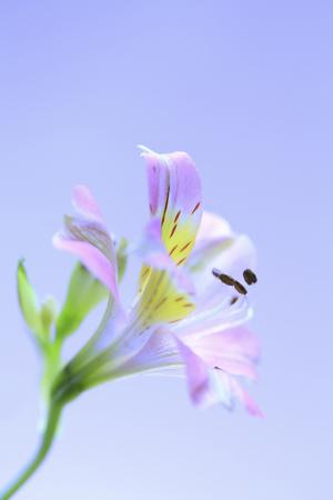 disperse: Flower urizeuzen