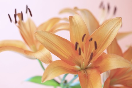 scatters: Flower Lily