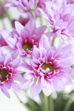 florid: Flowers Stock Photo