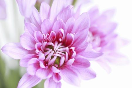disperse: Flowers Stock Photo