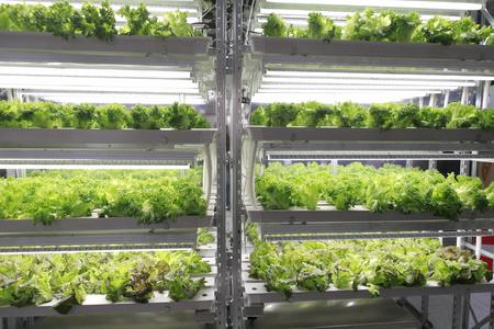 Vegetable plant Stock Photo