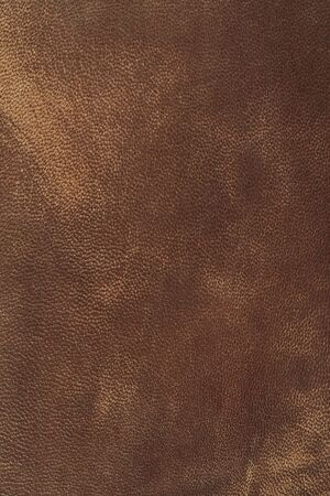 living thing: Leather Stock Photo