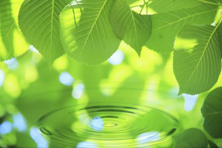 水と新緑 写真素材