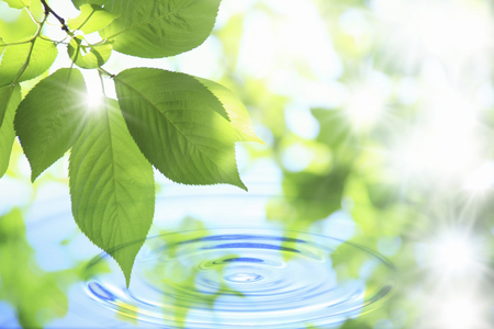 Water and fresh green