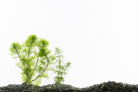 waterweed: Glass of aqua aquarium