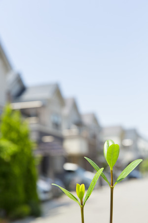 residential area: Sprouts and residential area Stock Photo