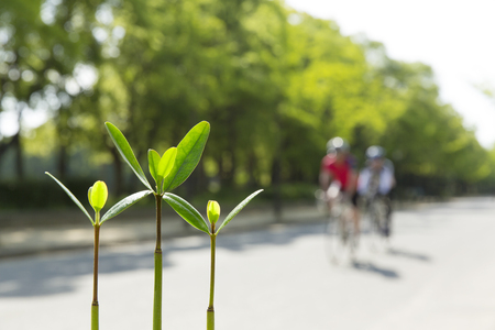 burgeoning: Sprouts and cycling