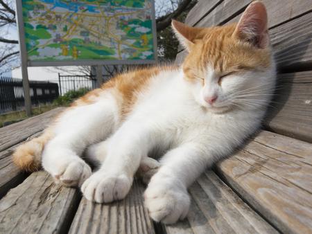 taking nap: Cat taking a nap  Stock Photo