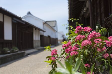 townscape: Townscape of red flowers and Imai-cho