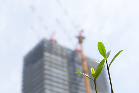 burgeoning: Sprout and building construction site