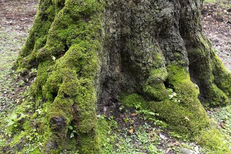 primeval forest: Nara Kasugayama of primeval forest old Stock Photo