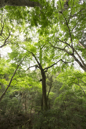 nara: NARA kasugayama primeval forest Stock Photo