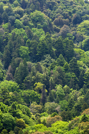 the world heritage: Kasugayama primeval forest of the world heritage
