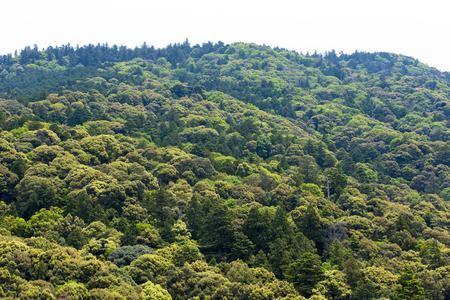 primeval forest: Kasugayama primeval forest of the world heritage