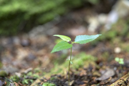 fallen tree: Sprout seedlings that grows to a fallen tree Stock Photo