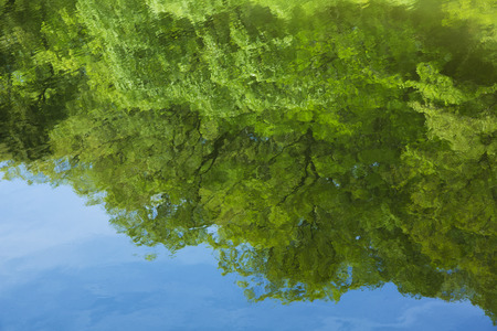 reflects: Water surface reflects the fresh green