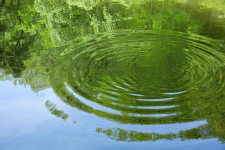 La superficie del agua refleja el verde fresco