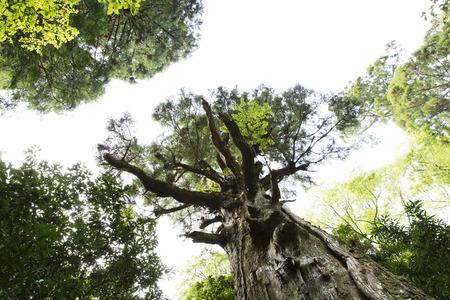 primeval forest: NARA kasugayama primeval forest Stock Photo