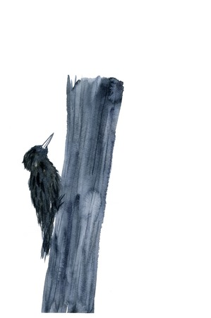 sumi: Cuckoo
