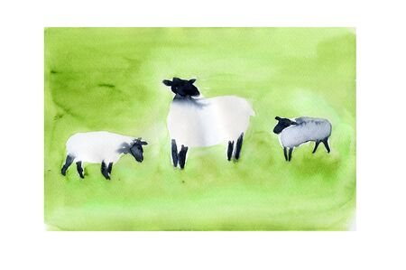 living organism: Sheep
