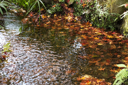 ups: Autumn leaves to be ups and downs in the waterside garden