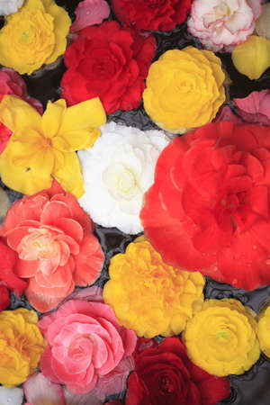 florid: Begonia