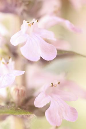 ceremonial: Twelve-layered ceremonial kimono flower