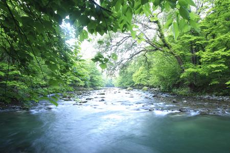 strumień: Oirase strumień
