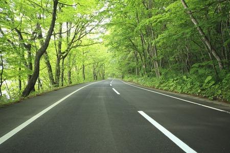 Fresh green road Stock Photo